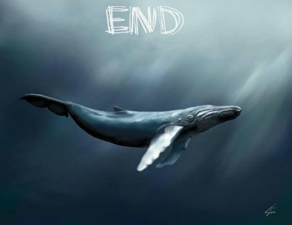 blue whale 4